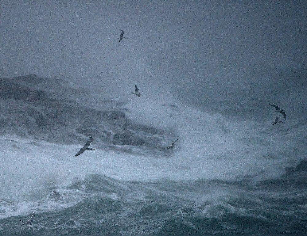 Stormfugler © Ebba Torsteinsen Jenssen